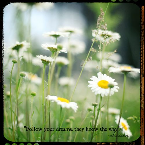 Thursday's thought daisies
