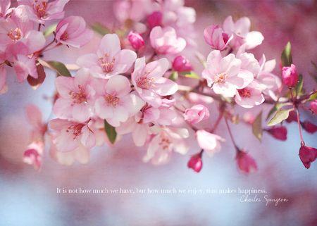 Thursdays thought blossom