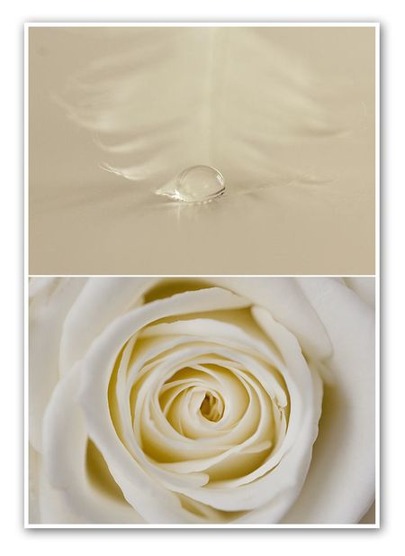 Diptych no. 26 white