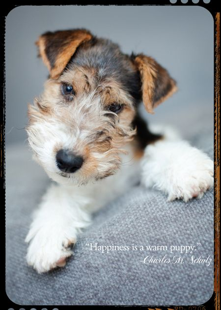 Thursday's thought puppy blog