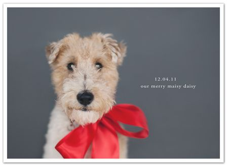 December daily 12.04 photoblog