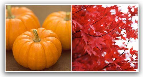 Autumn diptych week no 13