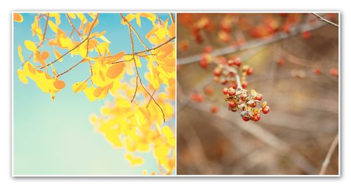 Diptych no. 46 beauty in world