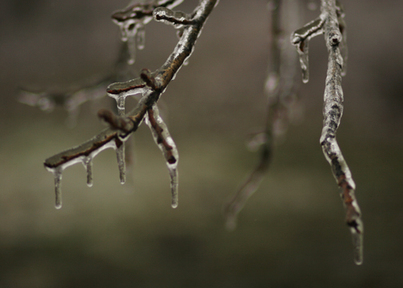 Ice_storm_3_for_web
